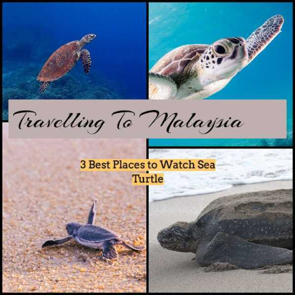 Travel to Malaysia: 3 best places to watch sea turtles