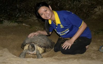 Terengganu turtles winning conservation war thanks to human hero